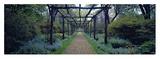 Garden path, Old Westbury Gardens, Long Island Konst av Richard Berenholtz