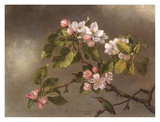 Hummingbird and Apple Blossoms Poster by Martin Johnson Heade