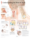 Understanding The Head & Neck Laminated Poster ポスター