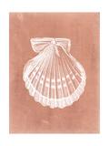 Sealife on Coral VII Giclée-Premiumdruck von  Vision Studio