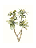 Tropical Watercolor Leaves III Premium Giclee Print by Megan Meagher