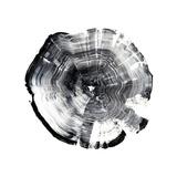 Tree Ring Abstract I Premium Giclee-trykk av Ethan Harper