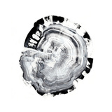 Tree Ring Abstract III 高品質プリント : イーサン・ハーパー
