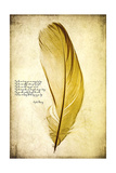 Feather in Color IV Posters by Honey Malek