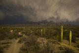 A Hiking Trail in Saguaro National Park During Approaching Storm Clouds Lit by Tucson Lights Photographic Print by Bill Hatcher