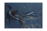Broadbill, Mako and Sea Arrows, New Jersey, 1988 Giclee Print by Stanley Meltzoff