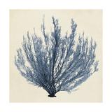 Coastal Seaweed III Kunstdruck von  Vision Studio