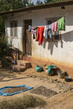 Betel Nuts and Clothes Dry in the Front Yard of a Rural Home Impressão fotográfica por Kelley Miller