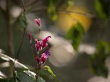 Flowers in the Jungle Mountains of the Serra Da Mantiqueira Impressão fotográfica por Alex Saberi