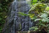 A Waterfall in the Mountain Jungles of the Serra Da Mantiqueira in Sao Paulo State Impressão fotográfica por Alex Saberi