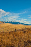 Wheat Fields Spread Below the Bridger Mountains in the Northern Gallatin Valley Near Bozeman Reproduction photographique par Gordon Wiltsie