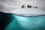 Chinstrap Penguins on an Ice Floe Off the Coast of Dank Island Reproduction photographique par David Doubilet