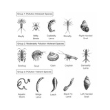 Macroinvertebrates Chart, Pollution Tolerance Poster by Spencer Sutton
