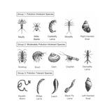 Macroinvertebrates Chart, Pollution Tolerance Lámina giclée prémium por Spencer Sutton