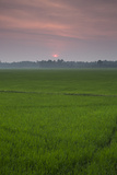 The Sun Sets over a Field in the Backwaters of India Impressão fotográfica por Kelley Miller