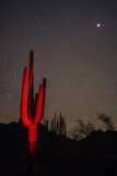 A Night Photo of a Saguaro in Organ Pipe National Monument in the Ajo Mountains, Arizona Photographic Print by Bill Hatcher