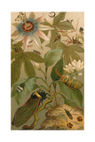 Clematis, Cicada and Beetles, 1894 Giclee Print by  Science Source