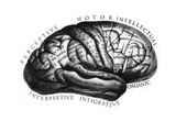 Diagram of Brain Functions Giclee Print by  Science Source