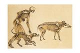 Skeletons of Man, Dog, Wild Boar, 1860 Lámina giclée por  Science Source