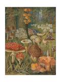 Citizens of the Land of Mushrooms Lámina giclée por  Science Source