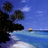 Tropical Paradise II Poster by Steve Thoms