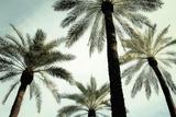 Palm Two Julisteet tekijänä Carla West