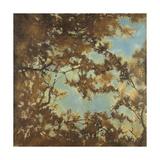 Tree Canopy Premium Giclee Print by Liz Jardine