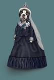 Queen Vic (Pets Rock) Pôsters por  Takkoda
