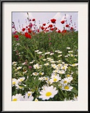 Wildflower Farming on a Kibbutz in Springtime Framed Photographic Print by Richard Nowitz
