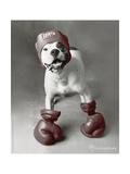 Boxing Dog Foto van Rachael Hale