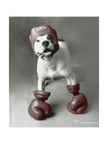 Boxing Dog Photo by Rachael Hale