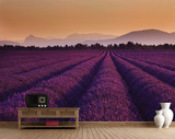 Lavender Fields Wall Mural Wallpaper Mural