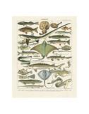 Poissons II Poster von Adolphe Millot