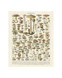 Champignons I Posters van Adolphe Millot