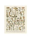 Champignons I Poster by Adolphe Millot