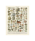 Champignons II Giclee Print by Adolphe Millot