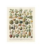 Fruits I Giclée-vedos tekijänä Adolphe Millot