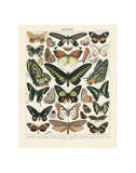Papillons III Plakater af Adolphe Millot