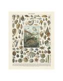 Mollosques II Kunstdrucke von Adolphe Millot