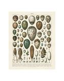 Oeufs Plakat af Adolphe Millot
