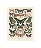 Papillons III Lámina giclée por Adolphe Millot