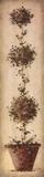 Tall Topiary I Prints