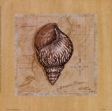 Meeresschätze IV Poster von Janet Kruskamp