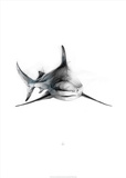 Shark 2 Print by Alexis Marcou