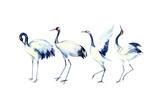 Watercolor Asian Crane Bird Set Affiche par  tanycya