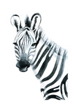 Watercolor Zebra Isolated on White Background Raster Illustration Art by  tanycya