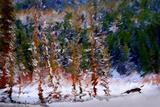Winter Scene Photographic Print by Ursula Abresch
