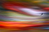 Lone Bird Metalldrucke von Ursula Abresch