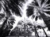 Palmiers tournoyants Affiches par Chip Forelli