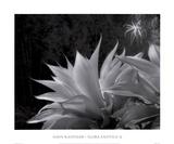 Flora Exotica X Julisteet tekijänä John Kasinger